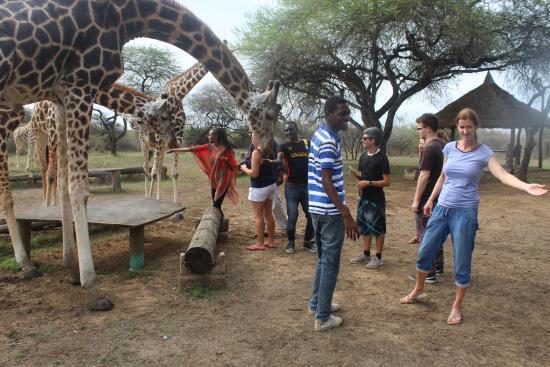 Best wildlife tour Company Mombasa