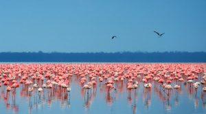 Top tours travel destinations Nakuru