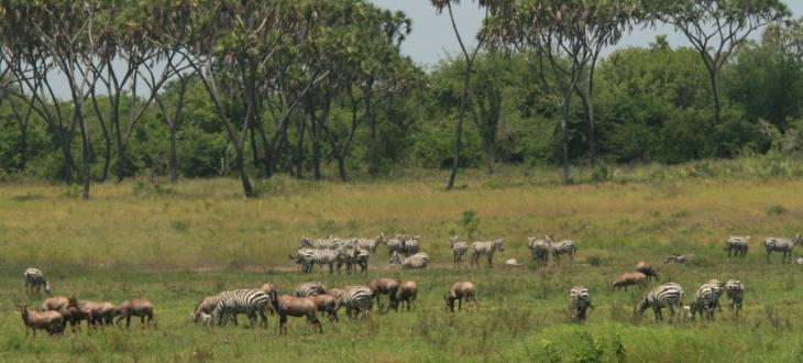 Kipini Wildlife tour Lamu
