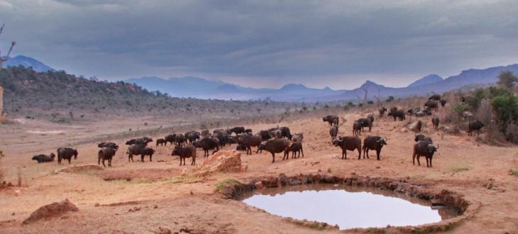 Buffalo springs game drive  Top 10 places to visit in Samburu