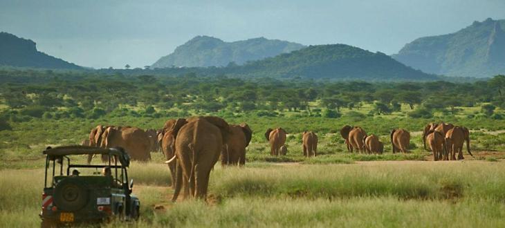 Samburu National reserve game drive  Top 10 places to visit in Samburu