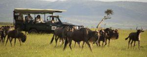 Maasai mara day tours