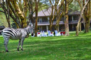 Naivasha staycation deals